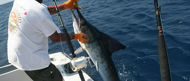 Bimini Deep-Sea Fishing